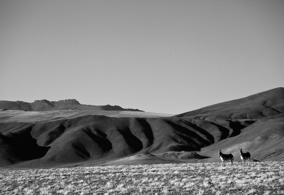 07_wildass.leh.india.blackand white.ladakh.jpg